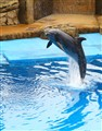 Dolphin loves to play