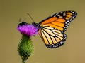 Butterfly, bee & thistle, very colorful.
