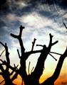 Tragedy of a Tree