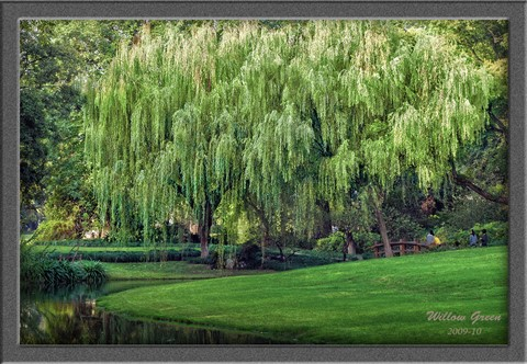 PA171728 Hangzhou Willow sct5b p53