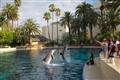 Dolphin Tricks!