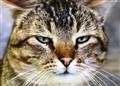 Feline Anger..
