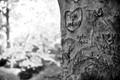 ....the arts on tree....