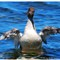 Duck Tales Lake Tahoe
