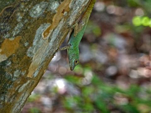 Lizard1010284