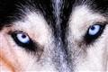 those eyes 3