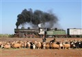 Syrian Steam Stampede