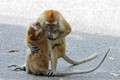 These two wild monkeys were shot a few years ago in Penang Botanical Gardens, Malaysia