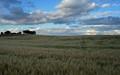 big sky and winter wheat