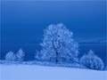 Ash in blue