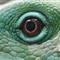 Fiji Banded Iguana detail