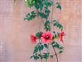 Flowers on Crete 2003