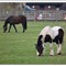 horses_0167h