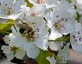 Spring has Sprung - Bees ar Buzzing