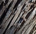 Cedar Bark Christmas