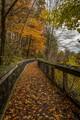 Rockford River Boardwalk-1237