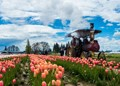Steam tractor at the Wooden Shoe Tulip Festival