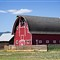 The Scheffer Farm Barns_4_rp