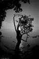 """Dancing"" Tree"