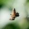 Spider Web-3
