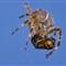 2012 09 11 11-28-40 - IMGP8080b2