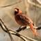 Birds14_Jan18_061_eds