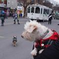 dogslifeparade