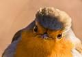 Robin hairstyle