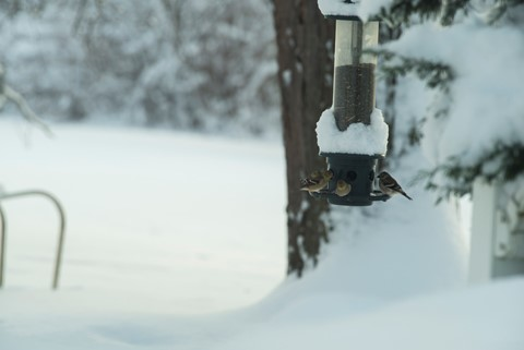 snow5_1200