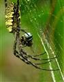 Spider & Prey