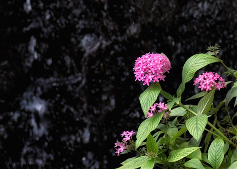2012-WildFlowers_email