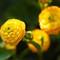 flowerpower01