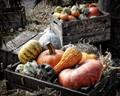 Malvern pumpkins