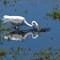 BWG-heron