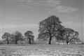 T&W 40 Frosty Tree Landscape mono
