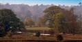 Bradgate Park Autumn