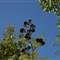 summer-2011-08-10-IMG_8740-berry