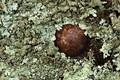 IMG_31615m6-3 Bolt and lichen