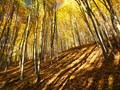 Forest in yellow