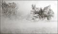 Snow Mist Geese