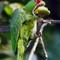 It's Parrot-dise!