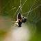 Spider Web-5