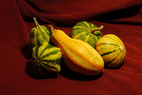 Gourds in October