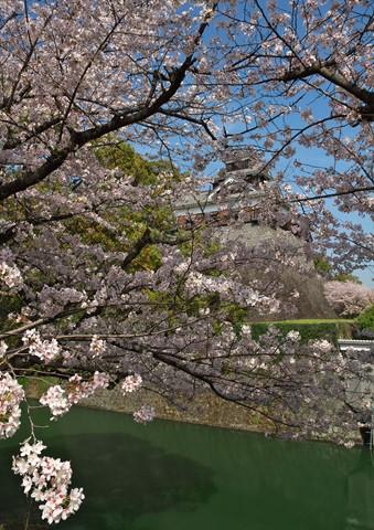 熊本城桜05