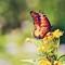 butterflytakingoff