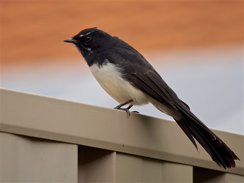 Serious Bird 001