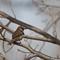 Sparrow web