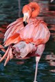 Flamingo's are their best