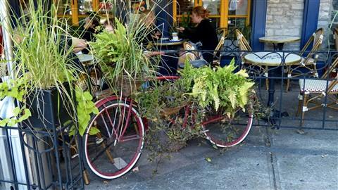 P1020264 vélo porteur de fleurs boul. champlain