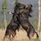 NordeggWildhorses_Sept22_2012_266